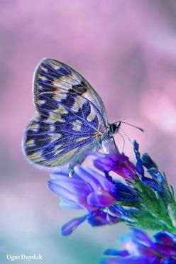 my favorite color and my favorite insect combined into one <3: Beautiful Butterflies, Butterfly, Purple, Color, Blue