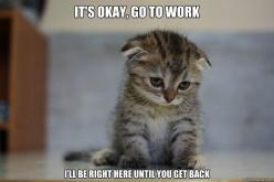 My poor little girl tries to come with me every day.: Cats, Animals, Pet, Funny, Now, Kittens, Kitty
