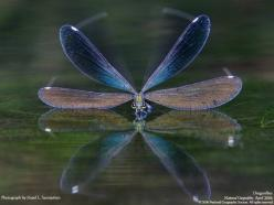 national geographic dragonfly | think the ancient Chinese sage who wrote this proverb had it right ...: Animals, Nature, National Geographic, Beautiful, Dragonfly, Photography, Dragonflies
