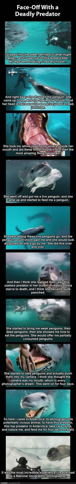National Geographic Photographer Faces Off with a Deadly Ocean Predator, Makes New Best Friend: Leopard Seals, Face Off, Deadly Leopard, Geographic Photographer, National Geographic, Dream Job, Deadly Predator, Animal