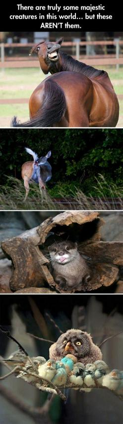 Nature can be majestic...but these guys aren't good representatives.: Funny Animals, Animal Pics, Funny Hummor, Funny Animal Faces, Funny Majestic, Funny Pictures, Majestic Funny, Funnies, Funny Cute Awesome Relatable