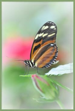 Nature is always beautiful: Beautiful Butterflies, Longwing Butterfly, Wings Beauties, Ladybugs Butterflies, Butterfly Wings, Ann Clarkson, Lady Bugs