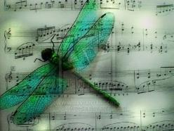 Nature Is Filled With The Spirit Of Music... Music Reflects Nature's Highest  Emotions !  http://about.me/Samissomar: Butterflies Dragonflies, Dragon Flies, Dragonfly Art, Color, Dragonfly S, Sheet Music, Music Sheet
