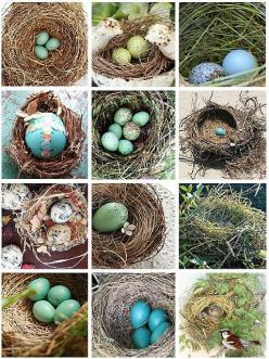 Nests...they are wonderous!: Nests Grouped, Birds Nests, Nests Eggs, Beautiful Nests, Bird Nests, Bird S Nests, Animal