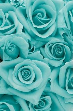 Never seen this color. No variation in shading. Photo shopped!!!!!! Sometimes wish there was a law that you had to label as such! Too much of this going on with flora & fauna. Natural beauty is what I like to see.: Rose Flowers, Iphone Wallpaper, Beau