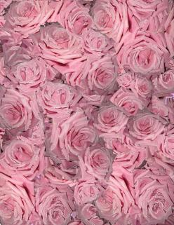 nothing but pink: Pink Flowers, Pink Roses, Pinkflowers Delicate, Pink Rose Rosa, Roses Art Pink Blue, Happy Pinkflowers, Colorful Roses