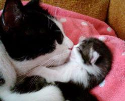 Nothing quite like a MOMMA's love: Cats, Animals, Kitty Cat, Mothers, Sweet, Pet, Kittens, Baby, Kitty Kiss