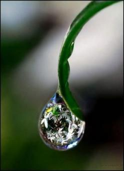 observe perfection in a droplet... a moment of mindfulness...  peace...: Water Drops, Nature, Drops, Dewdrops, Dew Drops, Photo, Water Droplets, Rain Drop