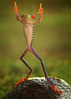 ocean-of-nectar:    earth-song:    put your hands up in the air, by shikhei goh    Nitai-Gaur Hari bol  Just chant,dance an be happy: Animals, Nature, Middle Finger, Funny, Things, Frogs, Photo