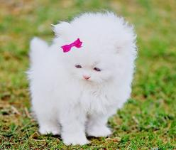 Oh my word! So adorable and fluffy!: Cats, Animals, Sweet, So Cute, Pet, Kittens, Kitty