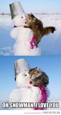 Oh Snowman…this kitty kinda looks like Isis! Except Isis would be on a beach in Key West, she loves the heat.: Cats, Kitty Cat, Animals, Cat Love, Crazy Cat, Snowman, Funny Animal, Friend, Cat Lady