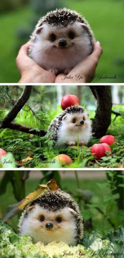 OMG...cutest hedgehog ever!: Animals, Happiest Hedgehog, Pet, Happy Hedgehog, So Happy, Box, Smile, Hedgehogs