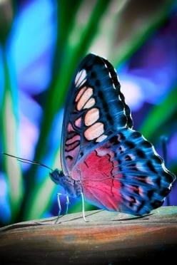 One of the most amazing creatures we see in the garden is the beautiful Butterfly. Graceful and quiet. Gliding from plant to plant, the butterfly is just icing on the[...]: Beautiful Butterflies, Nature, Color, Flutterby, Moth, Animal