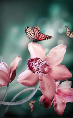 Orchid & butterflies, what a lovely pairing; wow!  Look at God's amazing design in camouflaging this butterfly!: Beautiful Butterflies, Pink Butterfly, Orchids, Color, Flowers, Garden