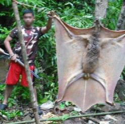 OtherBigBat: Nope Forest, Animal Pictures, Huge Animals, Giant Bat, Nope Creature, Largest Bats, Photo