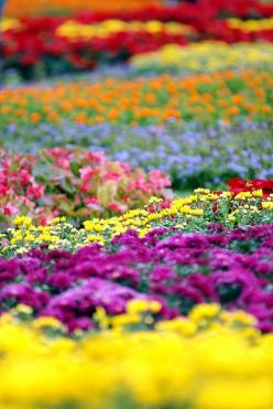 Our FLORAL FANCY photo gallery is one of our most popular - enjoy our tribute to all things related to flowers, through decor, fashion and nature pictures.: Colour, Field Of Flowers, Nature, Flower Power, Flower Gardens, Beautiful Flowers, Flowers Garden