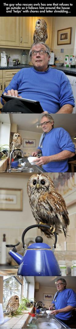OWL - This is adorable #bird #animal: Disney Movies, D Awwwww, Little Owls, Helpful Owl, House Owl, Owl Pet, Owl Friend, Pet Owl