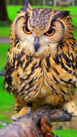 Owl www.BusinessBuySell.gr ΠΩΛΗΣΕΙΣ ΕΠΙΧΕΙΡΗΣΕΩΝ ΔΩΡΕΑΝ ΑΓΓΕΛΙΕΣ ΠΩΛΗΣΗΣ ΕΠΙΧΕΙΡΗΣΗΣ BUSINESS FOR SALE FREE OF CHARGE PUBLICATION: Birds Owls, Exclusive Buyers, Buyers Agent, Animal