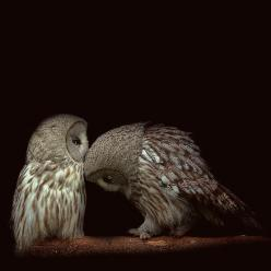 Owls. ☚i sorry i took the last mouse. i catch you one for dinner, kay?: Animals, Owl Kiss, Sweet, Nature, Beautiful, Photo, Birds, Owls