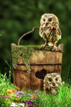Owls (Waiting for Mom by Jan Staes): Babies, Animals, Jan Staes, Baby Owls, Beautiful, Things, Photo, Birds, Mom