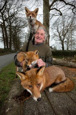 Patsy Gibbons and his rescued Foxes photo by Dylan Vaughan: Animals, Schools, Pet, Patsy Gibbons, Three Foxes, People, Photo, Man, Rescued Foxes
