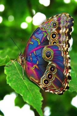 Peacock Butterfly, beautiful.. this alone shows me how much God loves us to give us something so amazing to see!  Wow..: Beautiful Butterflies, Animals, Nature, Color, Flutterby