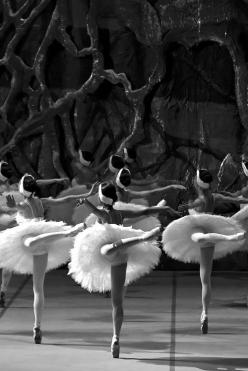 Photo by Tarkan Serengül: Ballet Dancers, Ballerinas, Black Swan, Beautiful, Art, Black White, Swan Lake, Dance Ballet