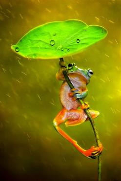Photograph Raining by Ellena Susanti on 500px: Picture, Nature, Photograph Raining, Frogs Animals, Froggy, Things, Morethanphotography Raining, Ellena Susanti
