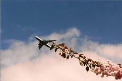 ...: Photos, Airplane, Art, Posts, Claire Grenade, Planes, Flower, Photography