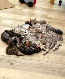 Pile 'o kittehs!: Cuddle Puddle, Cats, Kitten Pile, Crazy Cat, Kittens, Kitty, Animal, Cat Lady