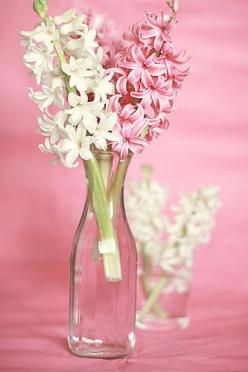 Pink and White: Colors Pink, Pink White, Aaa Flowers, Flowers Flores, White Hyacinths, Вσ Α Ισυѕ, Jars Bottles Vases Flowers, Light Spring