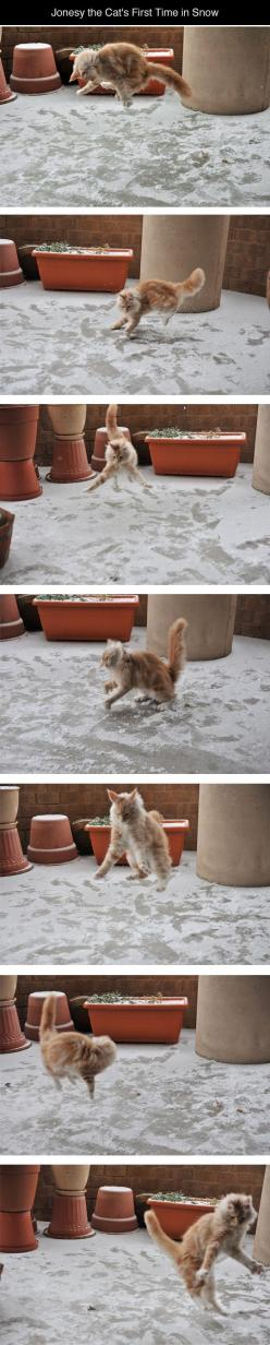 Playing In The Snow...this is one of the funniest things I've seen in a while!!: Funny Animals, Kitty Cats, First Time, Funny Cats, Snow Cat, Crazy Cat, Cat Lady