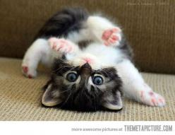 Please call vets. I thinks I's broken: Cats, Animals, Kitty Cat, Cutenes, Pets, Funny, Adorable, Kittens, Kitties