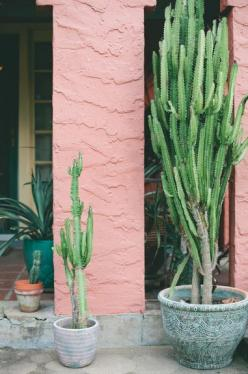 Potted Cacti. Want these in my future house: Cactus Lovers, Psychoactive Cactus, Cactus Plants, Flora, Kaktüsler Cactus