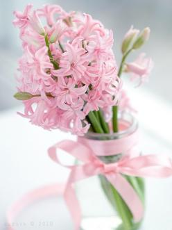 pretty pink hyacinth: Pink Flowers, Spring Flower, Idea, Pink Hyacinths, Pretty Pink, Flora, Beautiful, Garden, Favorite Flower
