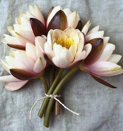 Pretty Water Lily combo. Only nature would put these colors together!: Lily Bouquet, Lotus Flowers, Wedding Ideas, Water Lily, Garden, Water Lilies