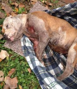 Prosecute Michigan owner that severely neglected pregnant dog! | YouSignAnimals.org: Animal Petitions, Animal Rights, Animal Cruelty, Animal Welfare, Michigan Owner, Prosecute Michigan