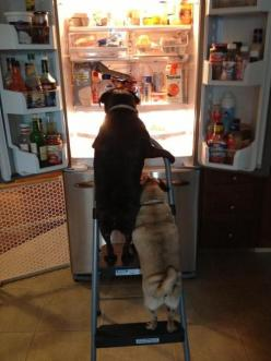 Pugs discover the promised land: Animals, Dogs, Pug Life, Pets, Funny, Pugs, Photo, Friend