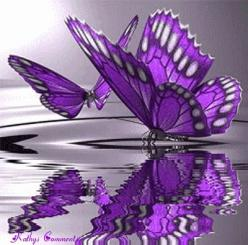 purple butterflies . . . has this been colored? it doesn't look real. Still pretty.: Beautiful Butterflies, Purple Butterflies, Purple Butterfly, Purple Passion, Flutterby, Things Purple, Color Purple, Animal