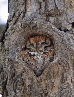"queerpioneer: "" I am the tree. I am the bark. I will give you a fucking heart attack in the dark. "": Photos, Perfect Fit, Animals, Stuff, Tree, Nature, Birds, Owls"