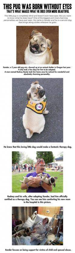 Quite possibly the greatest service dog ever…Absolutely adorable in every single way!: Animals Dogs, Amazing Dogs, Service Animal, Pug Dogs, Service Dogs, Pugs, Cool Pug Without Eyes Help
