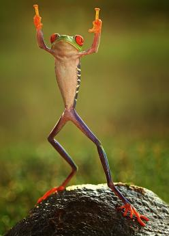 Raise the Roof!: Animals, Nature, Middle Finger, Funny, Things, Frogs, Photo