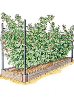 Raspberry Bed 2'x8' 5 plants: Gardening Idea, Green Thumb, Garden Ideas, Raised Beds, Raspberry Bed, Raspberries, Raspberry Plants, Raised Garden