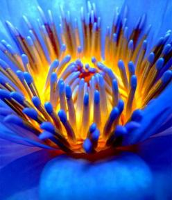 Really, really want a macro lens I want to take amazing pictures like that. Why not get the best out of what you consider to be one of  your talents. #saveyourlifeawayforabetterlens: Lotus, Macro Flower, Macro Photography, Colors, Beautiful Color, Beautif