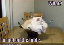 Reminds me of lex and lizzie lol: Cats, Animals, Funny Cat, Fat Cat, Crazy Cat, Funny Stuff, Humor, Funny Animal