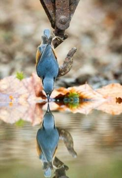 Reminds me of the children's book, are you my mother: Photos, Animals, Nature, Reflections, Beautiful Birds, Photography