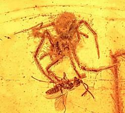Researchers have found what they say is the only fossil ever discovered of a spider attack on prey caught in its web -- a 100 million-year-old snapshot of an engagement frozen in time.: Ancient Spider, Unique Ancient, Wasp, Attack Preserved, Spiders, Ambe