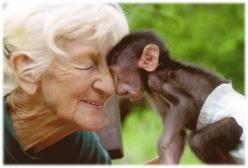 Rita Miljo— A great woman who saved thousands of baby baboons and reintroduced them into the wild, until her death in July 2012. She was 81 years old. ♥: Animals, Ritamiljo, Great Women, Rita Miljo, Saved Thousands, Into The Wild, July 2012, Monkey, Baby