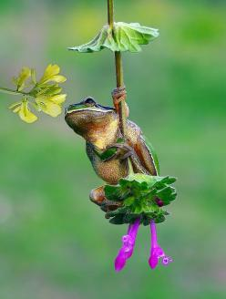 ~~romantic boy | frog by Savas Sener~~: Animals, Savas Sener, Creature, Boys, Frogs, Photo, Flower