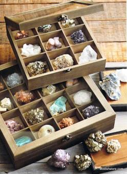 Roost Mineral & Fossil Specimen Collection: Gemstone Decor, Mineral Specimen, Box, Fossil Specimen, Fossils, Roost Mineral, Minerals